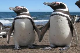 Diet dan Keberhasilan Perkembangbiakan Penguin