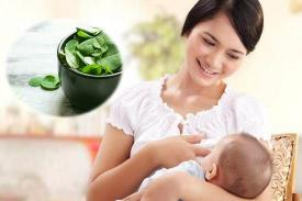 Khasiat Daun Kelor Bagi Ibu Menyusui