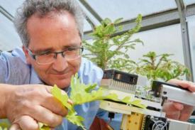 Polusi Membuat Pohon Lebih Rentan Terhadap Kekeringan