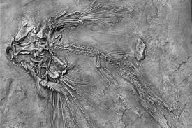 Fosil Ikan Terbang Ditemukan di China